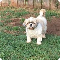 Adopt A Pet :: Puddin - San Antonio, TX