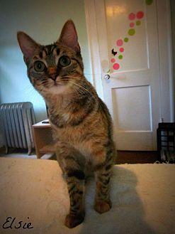 Domestic Shorthair Kitten for adoption in Mansfield, Ohio - Elsie - FIV+