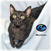 Adopt A Pet :: Morticia - Howell, MI