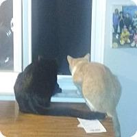 Adopt A Pet :: Adopted !!! Sir Pete!!!! - wayne, MI