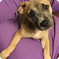 Adopt A Pet :: MORGAN - Moosup, CT