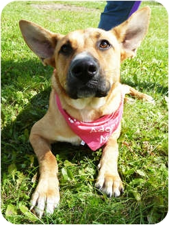 Shepherd (Unknown Type) Mix Dog for adoption in Detroit, Michigan - Mia-Adopted!