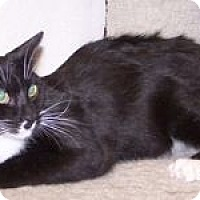 Adopt A Pet :: K-Emery3-Matlock - Colorado Springs, CO