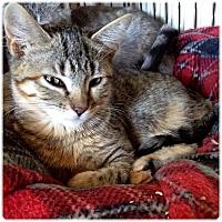 Adopt A Pet :: Razz - New  York City, NY