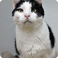 Adopt A Pet :: Duckie 161571 - Atlanta, GA