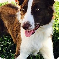 Adopt A Pet :: SARA LEE - San Pedro, CA