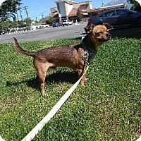 Adopt A Pet :: Pocket - Ogden, UT