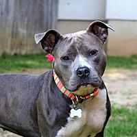 Adopt A Pet :: CALLIE - Milwaukee, WI