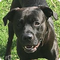 Adopt A Pet :: Hoss - Newnan, GA