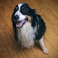Adopt A Pet :: Duncan - Charleston, SC