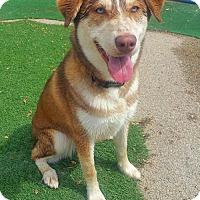 Adopt A Pet :: Sadie - Cedar Rapids, IA