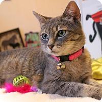 Adopt A Pet :: Misty - Hinton, OK