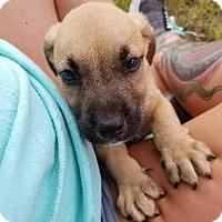 Adopt A Pet :: Riley - Manhattan, NY