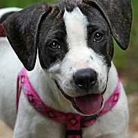 Adopt A Pet :: Peppa - Allentown, PA