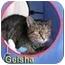 Photo 2 - Domestic Shorthair Cat for adoption in Aldie, Virginia - Geisha