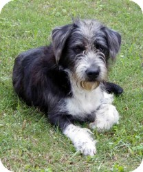 Terrier (Unknown Type, Medium) Dog for adoption in Baltimore, Maryland - Movie star Coo