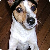 Adopt A Pet :: TONY - Hollywood, FL