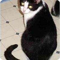 Adopt A Pet :: Oreo - Danville, KY