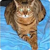 Adopt A Pet :: Ali - Redwood City, CA