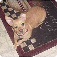 Adopt A Pet :: Milly - Chandler, IN