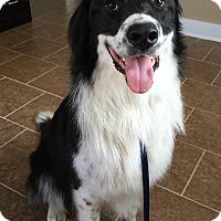 Adopt A Pet :: Boo Radley - Russellville, KY