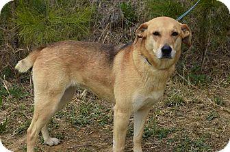 Shepherd (Unknown Type) Mix Dog for adoption in Minneapolis, Minnesota - Bella