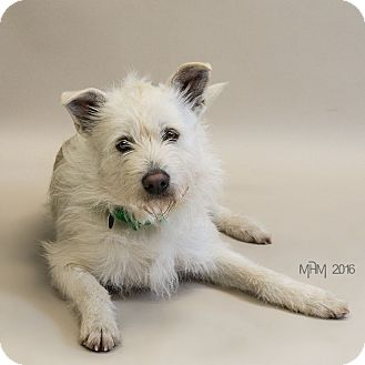 Terrier (Unknown Type, Medium) Mix Dog for adoption in Naperville, Illinois - Arthur