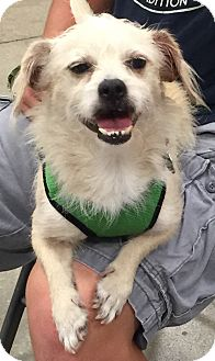 Terrier (Unknown Type, Small) Mix Dog for adoption in Fort Myers, Florida - Charlie