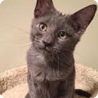 Adopt A Pet :: Audii - East Hanover, NJ