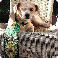 Adopt A Pet :: Hannah (Farrah) - Los Angeles, CA