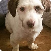 Adopt A Pet :: Smiley - Detroit, MI