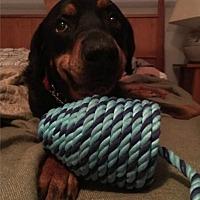Adopt A Pet :: Greta - San Martin, CA