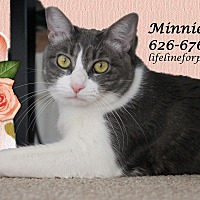 Adopt A Pet :: A Young Female: MINNIE - Monrovia, CA