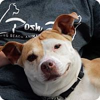 Adopt A Pet :: Mabel - Long Beach, NY