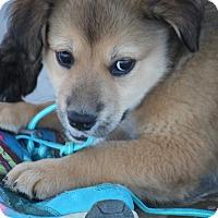 Adopt A Pet :: Tally D ADOPTION PENDING - Hooksett, NH