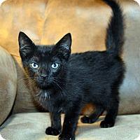 Adopt A Pet :: Midnight - Richmond, VA