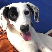 Adopt A Pet :: Clover - Sparta, NJ