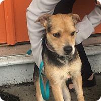 Adopt A Pet :: BillyJack - Midland Park, NJ