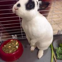 Adopt A Pet :: Hefner - Seattle, WA