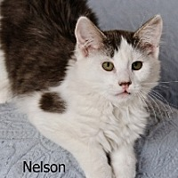 Adopt A Pet :: Nelson - Polson, MT