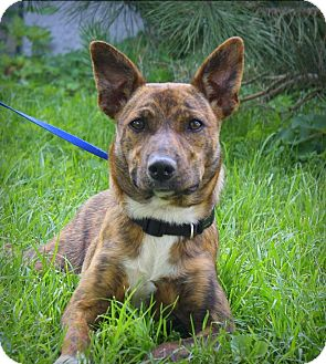 Mountain Cur/Terrier (Unknown Type, Medium) Mix Dog for adoption in Albert Lea, Minnesota - Cee Cee #2