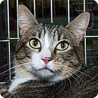 Adopt A Pet :: Lia N - Sacramento, CA