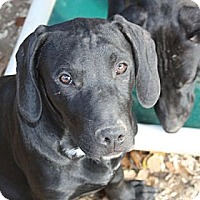 Adopt A Pet :: Chase - PENDING, in ME - kennebunkport, ME