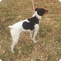 Adopt A Pet :: Bubba & roxie - Wahoo, NE