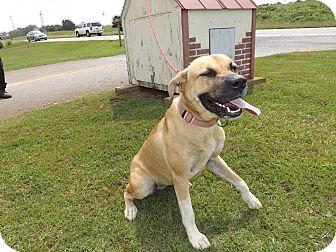 Black Mouth Cur/Labrador Retriever Mix Dog for adoption in Thomaston, Georgia - Deanna