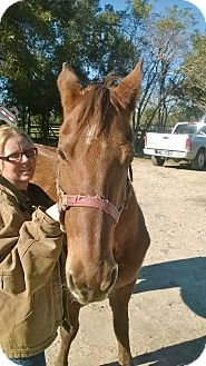 Quarterhorse Mix for adoption in Hitchcock, Texas - Serenity