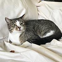 Adopt A Pet :: Xena - Monrovia, CA