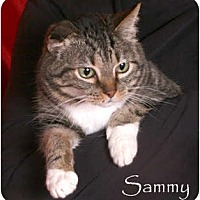 Adopt A Pet :: Sammy - Nashville, TN