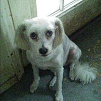Adopt A Pet :: Mickey - Inverness, FL