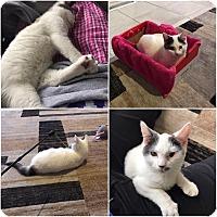 Adopt A Pet :: Gunner - Powell, OH